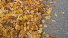 UPS driver takes photo of child obscured in pile of leaves to share important message about safety: 'My heart completely stopped'