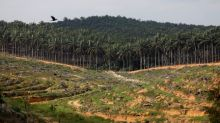 Fearing tobacco's fate, palm oil industry fights back