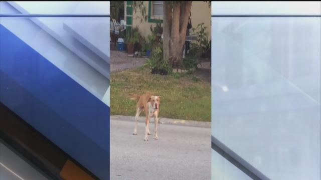 Dog that attacked shot by TPD officer