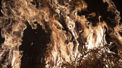 Bolsonaro: Null-Toleranz-Politik bei Umweltverbrechen