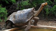 Galapagos reopens tourist sites after virus lockdown