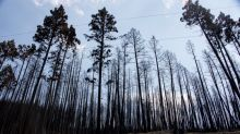 Several arsons reported in Williams Lake, weeks after wildfire evacuation