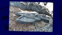Rare découverte d'un squelette millénaire de baleine en Thaïlande