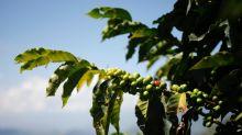 Mudanças climáticas ameaçam áreas de cultivo de café na América Latina