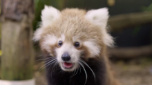 'Exotic' Baby Animal Boom at Symbio Wildlife Park