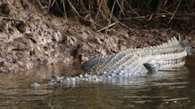Crocodile dies after shot with metal arrow and stabbed