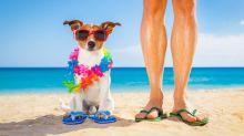 Animali in vacanza: 5 consigli che è meglio sapere