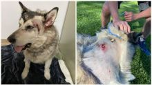 Camper shoots, injures Idaho family's dog after mistaking her for a wolf
