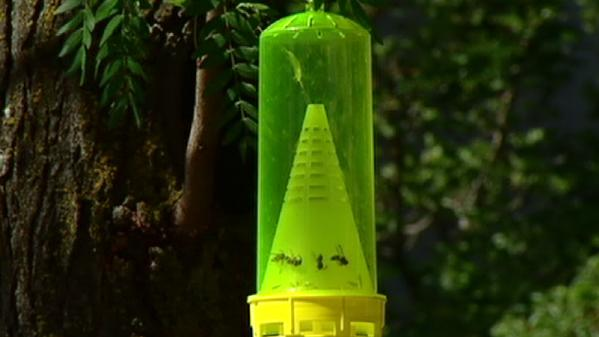 Cold weather could help get rid of yellow jackets this summer