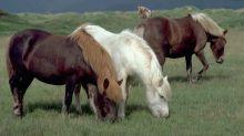 Un poney tué et mutilé dans l'Aveyron