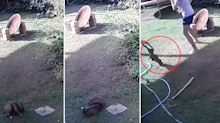 Terrifying video of python wrapping around family's puppy in backyard