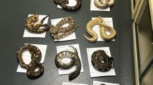RSPCA investigates after 13 snakes found dumped behind fire station in children's pillowcase