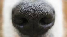 """Studie zeigt: Hunde können Wärme """"riechen"""""""