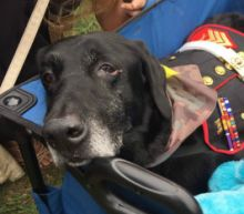 Bomb-Sniffing Marine Dog Who Served in Afghanistan Gets a Hero's Farewell