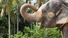 Five animals that can speak human