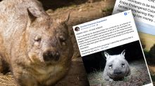 Backflip on decision to slaughter 200 wombats after international outcry