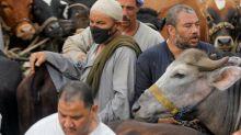 Egyptians crowd livestock market ahead of Eid holiday despite coronavirus