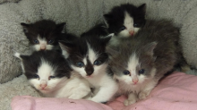 Kittens saved from certain death after being dumped in a bin