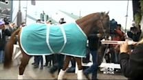 NorCal Horse, California Chrome, Wins The Kentucky Derby