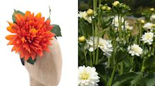Dahlias: nude neutrals or flaming, Frida Kahlo-inspired fiestas?