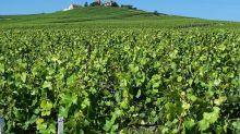 En Champagne, des centaines de petits paysans vont devenir millionnaires
