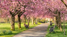 A walk in the park boosts your mood as much as Christmas, study finds