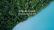 El bosque anti Trump: plantan medio millón de árboles para compensar su nula política medioambiental
