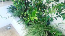 Come Creare un Giardino a Bassa Manutenzione
