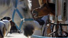 Misteriosas mutilaciones de caballos desconciertan a Francia