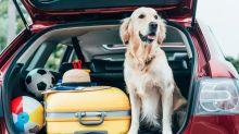 Porti il cane in vacanza? Guarda come metterlo a suo agio
