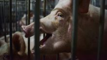 China unveils plan to boost pork production