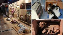 【人間有情】土耳其出現大風雪 店舖開放招待流浪貓狗
