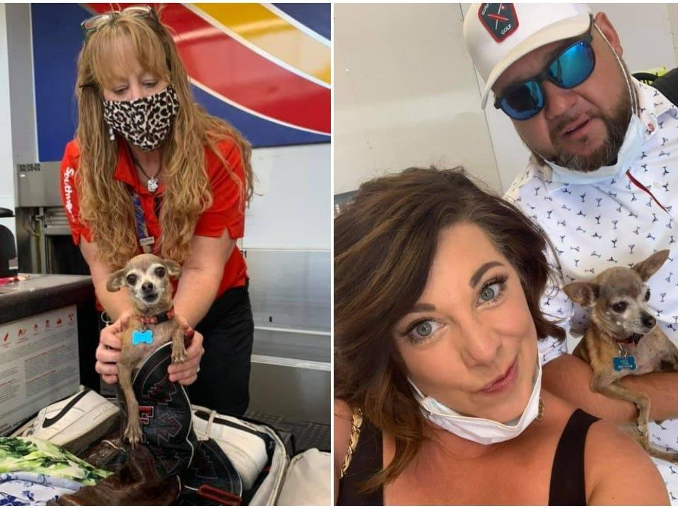 , A couple flying to Las Vegas didn't realize their Chihuahua was hiding in their suitcase until the airline said it was too heavy, The Evepost National News