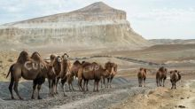 Feasts and holy days in the Kazakhstan desert