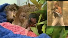Heroic rescuer reveals why koala hospital had no choice but to put Lewis to sleep
