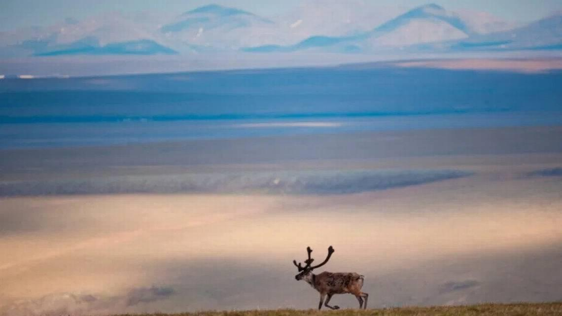 Arctic National Wildlife Refuge worth far more that $25 an acre in oil leases. Congress needs to fix this | Opinion