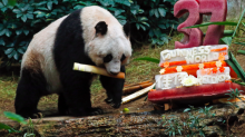 The 'world's oldest panda' has died aged 38 after a short illness