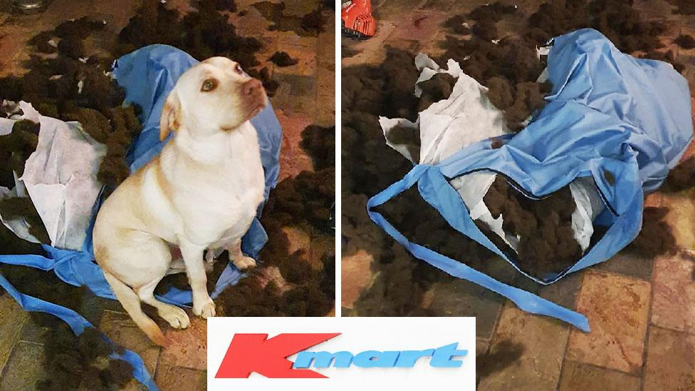 Kmart's 'chew resistant' budget pet buy blasted: 'It lasted an hour'