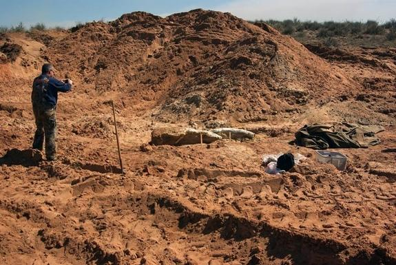 A skull and two tusk fragments from a Columbian mammoth, found in a sand it in Oklahoma.