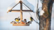 Vögel füttern im Winter: Was du dazu wissen musst