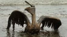 Ten years after Deepwater Horizon explosion and oil spill, marine wildlife struggle to recover