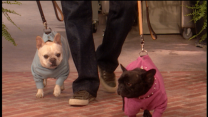Fashionable Knits for your Pets