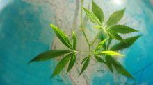 5 Top Marijuana Stories of 2018