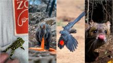 Meet Some Of The Australian Animals Hardest Hit By The Wildfire Disaster