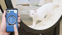 10 gadget tech per festeggiare le giornata mondiale del gatto