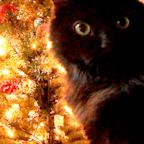 Hidden camera shows cats attacking Christmas tree