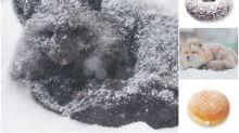 【撞樣】日本網民大發現 雪地狐狸激似「冬甩」