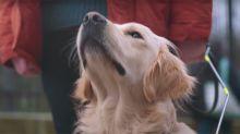 Burger King adiestra a un perro para que pueda rastrear Whoppers en cualquier ciudad