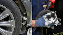 Kitten rescued after getting stuck in engine compartment on 190km drive
