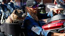 This is what it looks like in Sturgis, South Dakota, where hundreds of thousands of unmasked bikers are partying like the coronavirus isn't real